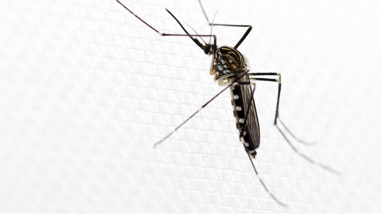 Vor Insektenstichen schützen.
